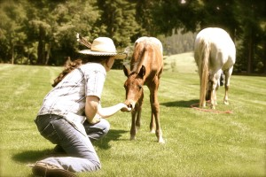 Foal and Wrangler